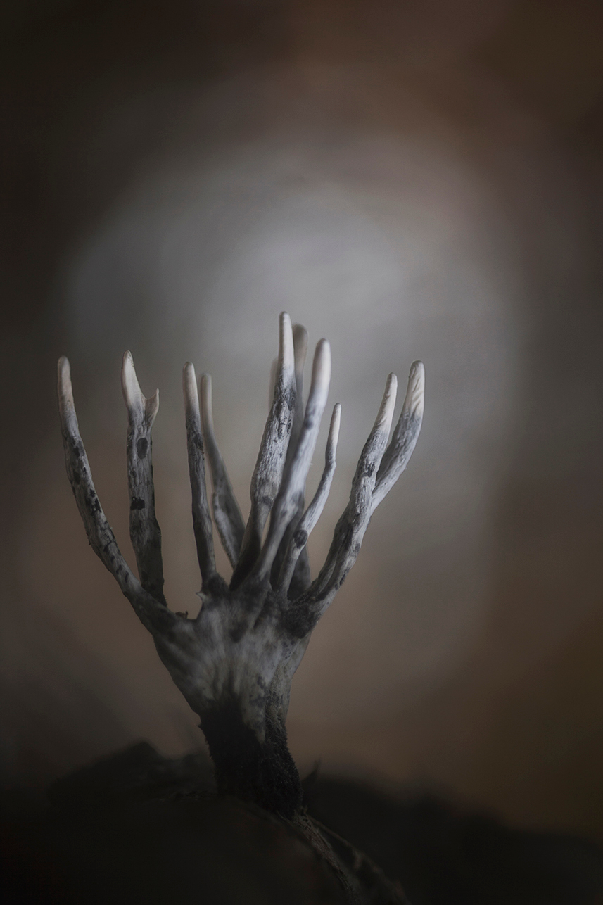 A crackling crone with brittle bones - She comes by night,in fearsome flight in garments black as pitch. - foto door daan de vos op 15-11-2015 - deze foto bevat: donker, macro, natuur, bruin, licht, herfst, geweizwam, eng, creepy, duister, bokeh
