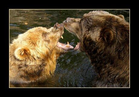 Kissing bears..