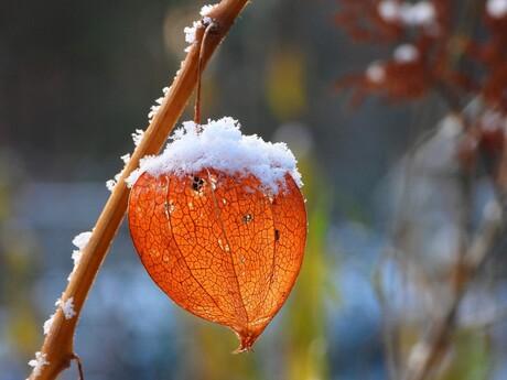 beetje winters