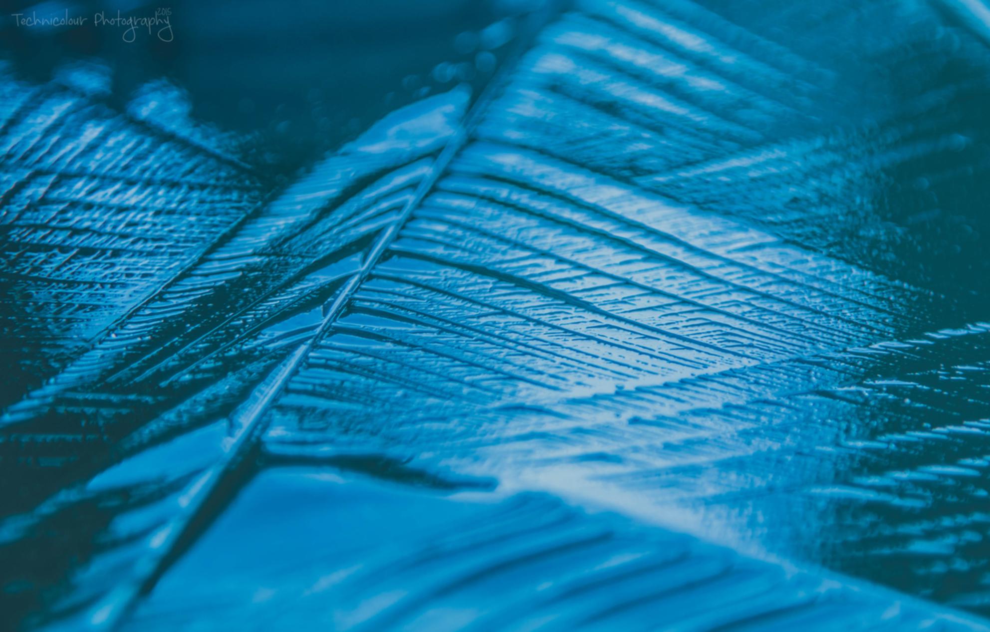 """Talvilaulu - """"Wintersong"""" - foto door TechniColour op 23-11-2015 - deze foto bevat: blauw, natuur, licht, winter, ijs, koud, bokeh - Deze foto mag gebruikt worden in een Zoom.nl publicatie"""