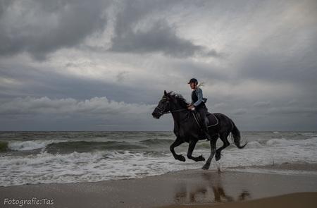 In galop.... - - - foto door Taswor op 13-10-2018 - deze foto bevat: paard