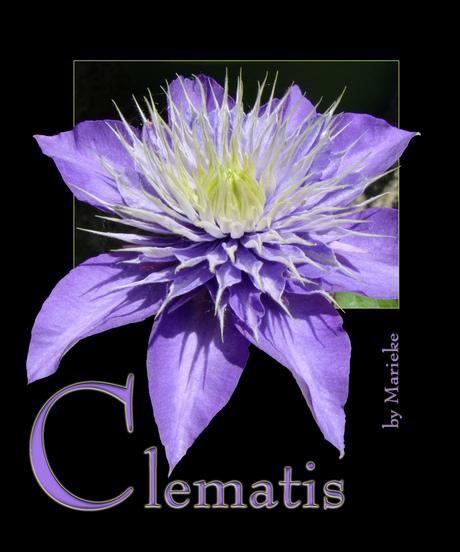the colour purple (6)