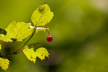 Natuurtuin Westerpark 1: eenzame bes