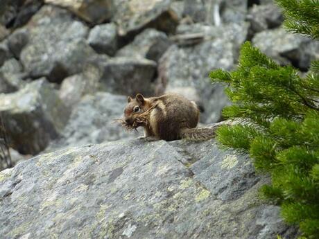 Squirrel Gathering Equipment