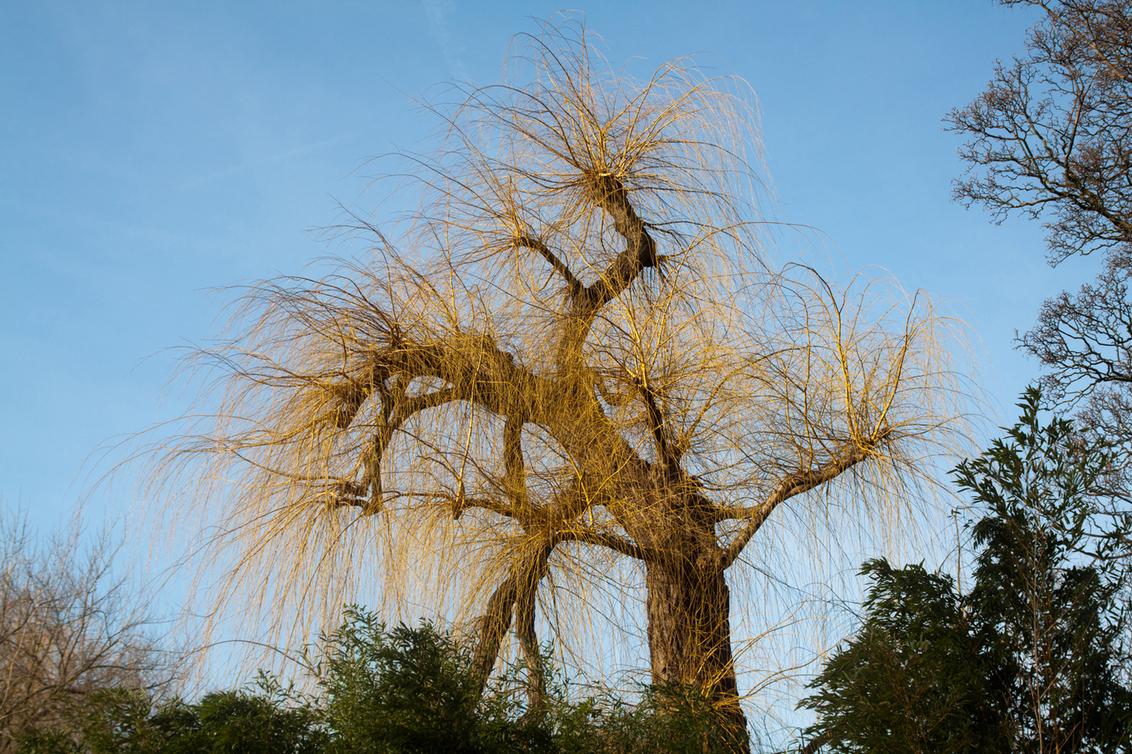 Boom 2 - Ik heb iets met bomen... Uit mijn inmiddels al tot obesitas-afmetingen aangegroeide map wilde ik vandaag 2 exemplaren aan de community tonen. Een pr - foto door kosmopol op 11-02-2012 - deze foto bevat: boom, kosmopol