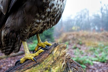 Dit vogeltje was te groot voor mijn camera met remote...
