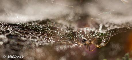 Itsy bitsy spider.....