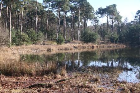 veertien vennenwandeling - Vlakbij Oisterwijk zijn veertien prachtige vennen in een zeer afwisselend bosgebied. Heerlijk om doorheen te wandelen en overal zijn er doorkijkjes e - foto door 1952-ansstegeman op 03-03-2021 - deze foto bevat: boom, natuur, bos, voorjaar, nederland