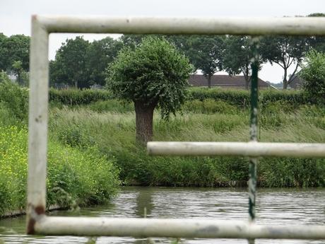 Wilg omlijst naast Kromme Rijn