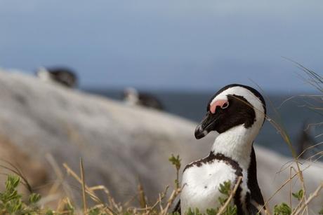 pinguineiland