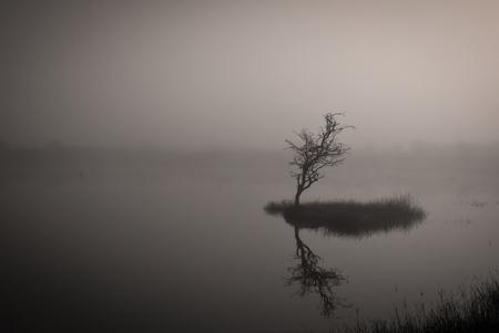 Landschap in de Mist - Deze is nog van vorige week. Een landschap in de mist. - foto door rene-110 op 27-03-2011 - deze foto bevat: landschap, mist, awd, waterleidingduinen