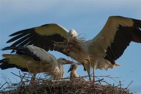 Nest onderhouden....
