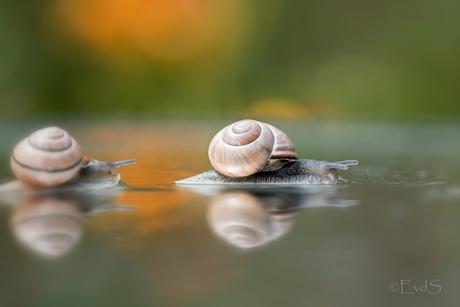 It's raining....snails!