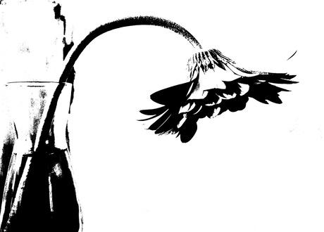bloem black and white