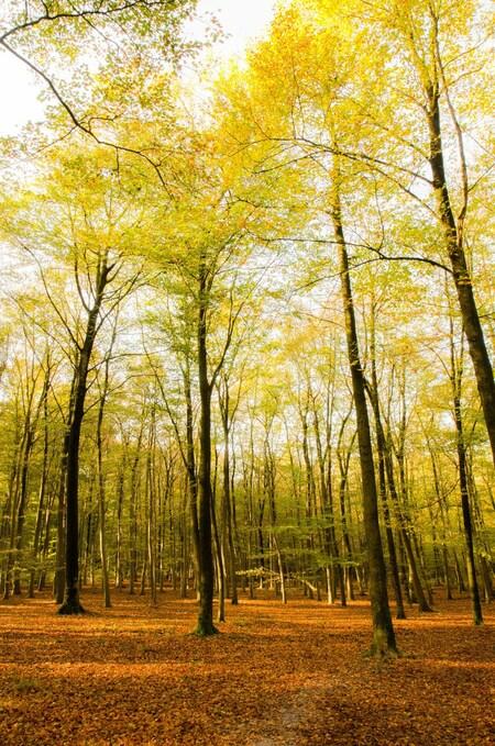 Herfstplaatje - Een kleine serie plaatjes uit het Mastbos, Breda. - foto door aschuijffel op 17-11-2013 - deze foto bevat: groen, bladeren, bruin, herfst, bomen, breda, mastbos