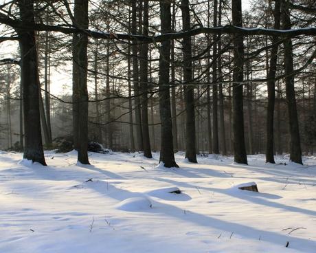 Bomen in de winterzon