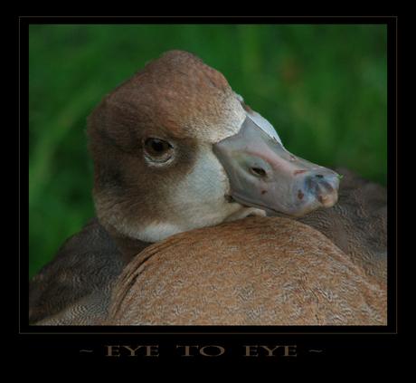 ~ Eye To Eye ~