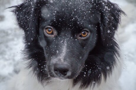 A Doggy Winter