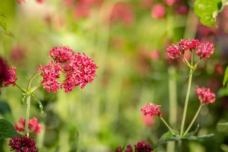 IMG_4229 bloem in de tuin.