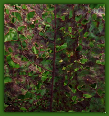 Camouflage zuring