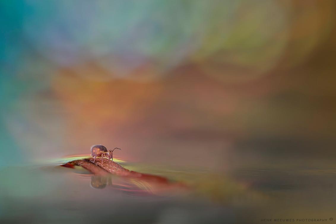 A wonderfull world - Ik blijf me verbazen over de wonderlijke macrowereld. Wat een bijzondere wereldjes kun je toch creëren met de macrolens.  Op zoom lijkt iedereen g - foto door h.meeuwes op 22-01-2018 - deze foto bevat: kleur, macro, water, licht, eiland, dof, drijven, bokeh, springstaartje, groot diafragma, henk meeuwes