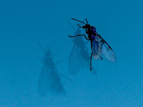 Vlieg op het raam