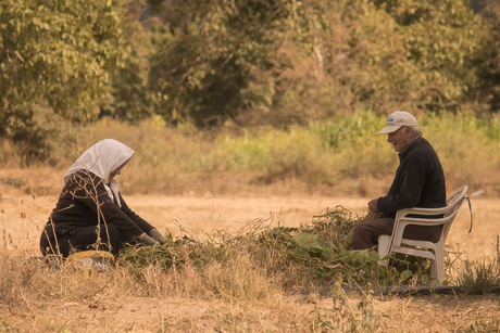 Het oogstseizoen is begonnen op het Kretens platteland