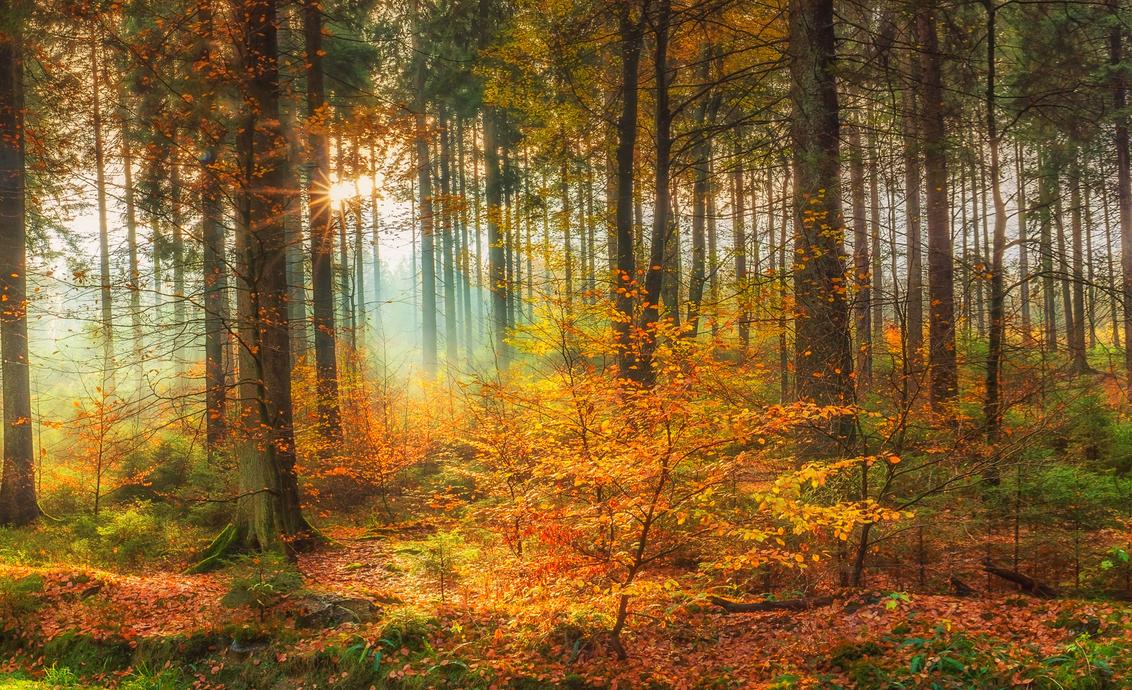 Fairy Tale - - - foto door Ilona-swinkels op 28-07-2018 - deze foto bevat: panorama, natuur, herfst, landschap, bos, tegenlicht, bomen, bergen