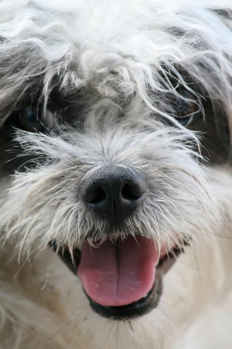 Blije hond et natte neus