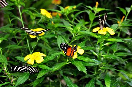 een boel vlinders?!