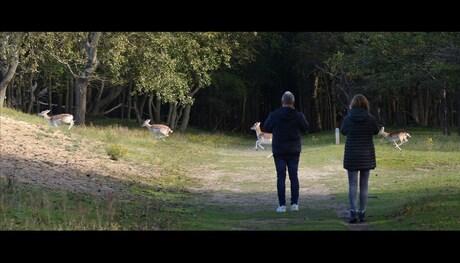 As deer go by
