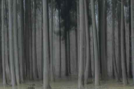 Misty winter !!