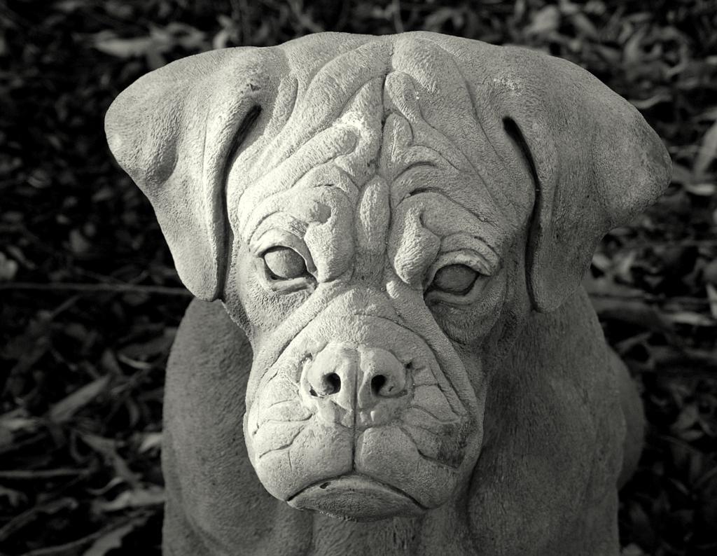 Hondenweer! - Dit is het trieste beeld voor de komende herfstdagen, hondenweer, ik zie geen lichtpuntje. - foto door henri1952 op 26-11-2009 - deze foto bevat: hond