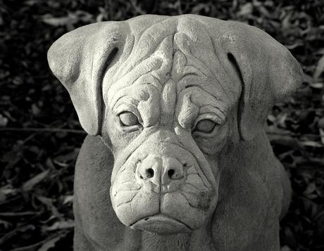 Hondenweer!