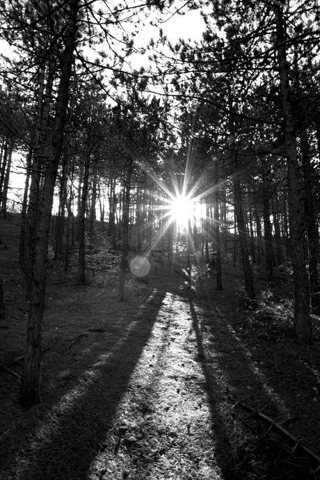 Sunshine in Schoorl @ Fall