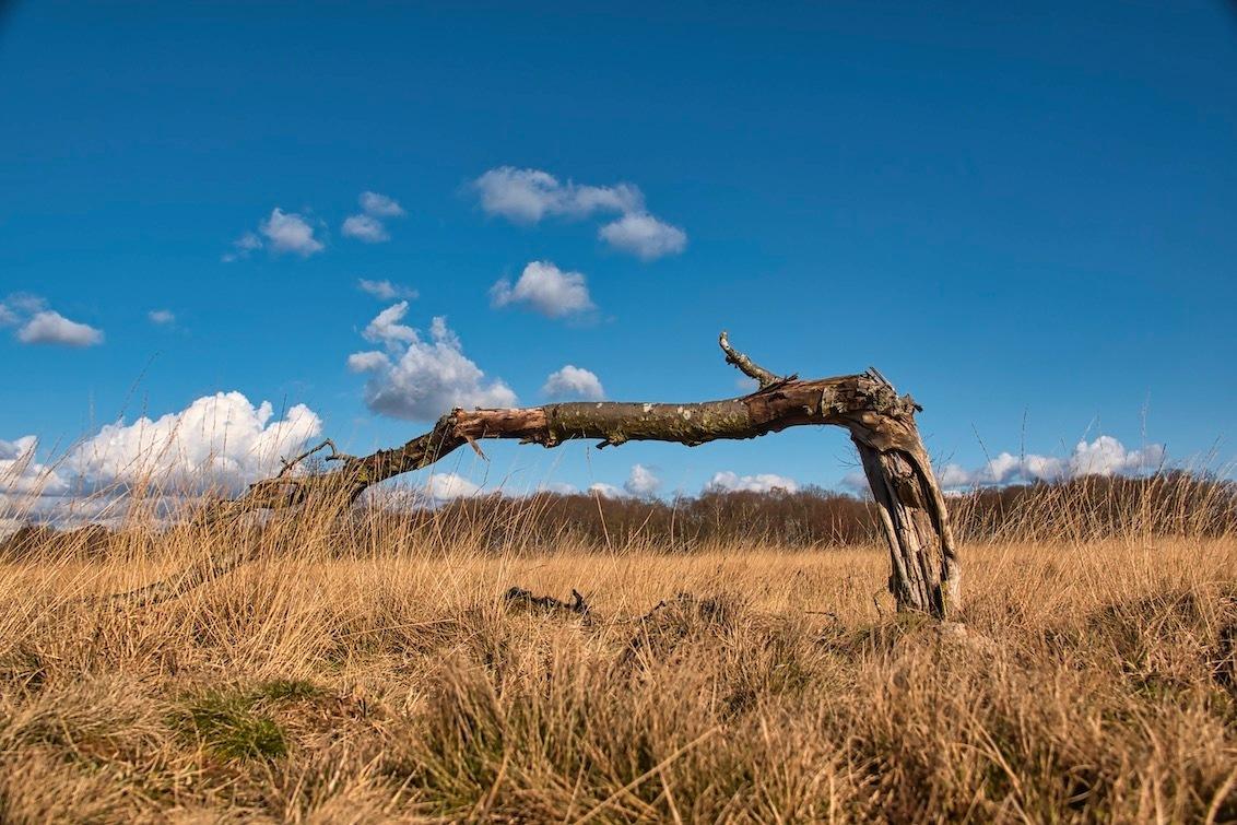 Vertrouwen? - Gisteren naar het debat in de tweede kamer op TV gekeken. Voor mij toont deze foto hoe het met het vertrouwen in de politiek zit.......geknakt :)   - foto door JerPet op 02-04-2021 - deze foto bevat: lucht, wolken, boom, natuur, landschap, heide, nederland