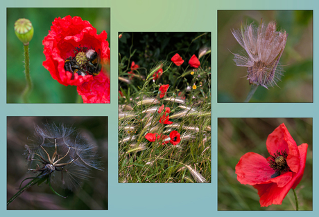 collage veldbloemen