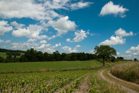 Landschap Somme-Leusde