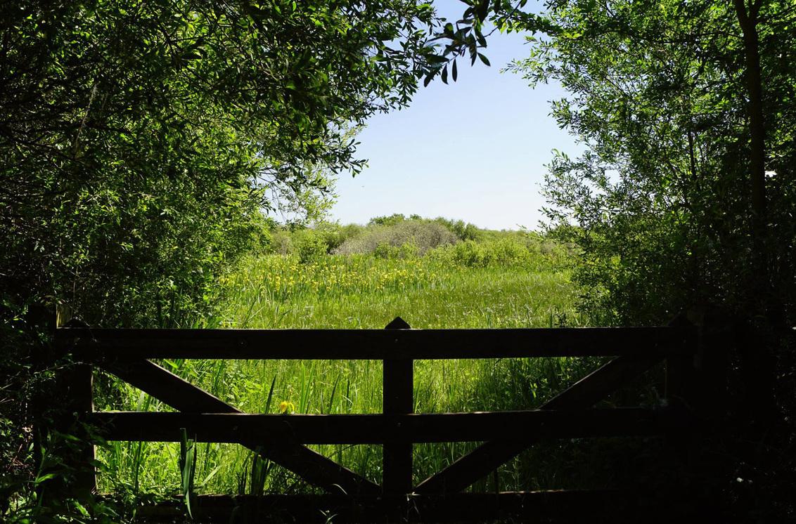 Doorkijkje - - - foto door MarijeScheening op 08-08-2017 - deze foto bevat: groen, lucht, zon, boom, strand, kikker, lente, natuur, licht, blad, landschap, bos, zomer, voorjaar, nederland