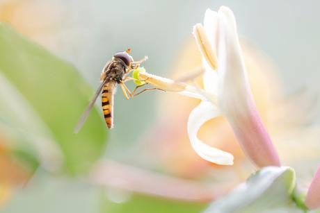 Bloem met insect