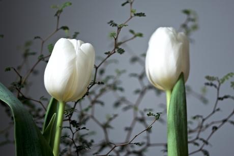 duo tulpen