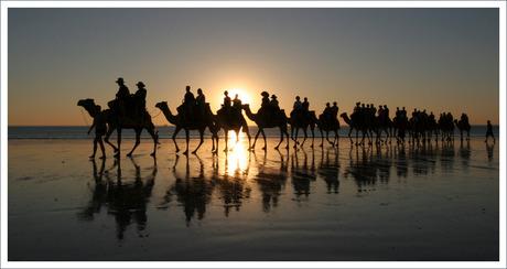 kamelen op cable beach