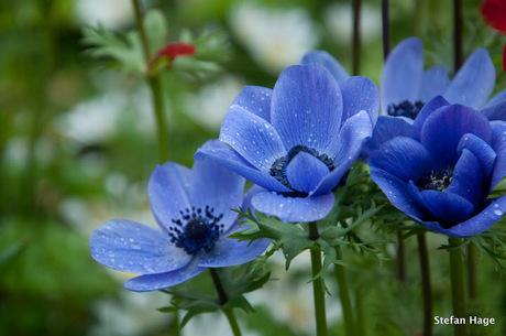 Regendruppels op bloembladeren