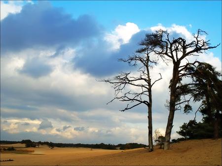 Zand en bomen - Hier een foto vanaf de Loonse en Dunense duinen. Misschien niet de meest orginele compositie maar door de lucht en het najaarslicht vind ik hem toch  - foto door juriheise op 29-10-2009 - deze foto bevat: duinen, drunense, zand, loonse
