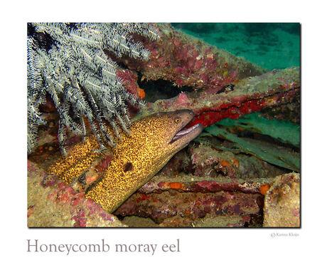 Honeycomb Moray ale