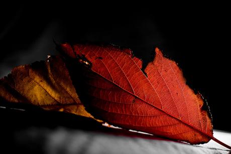 Autumn2!