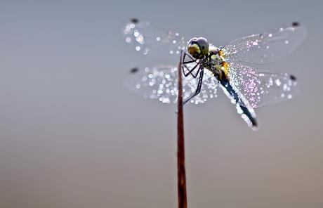 Glitter Queen....