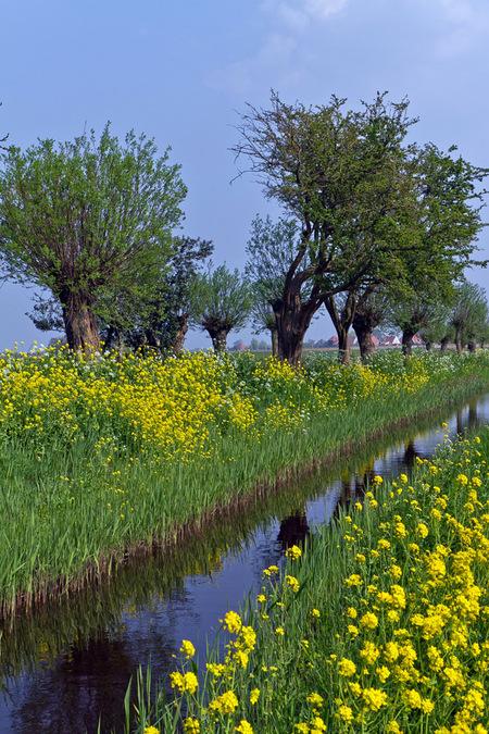 Purmerland - Een mooie voorjaarsdag in Purmerland. Alles staat in bloei, een fijne tijd om te fotograferen. - foto door Maragmar op 16-09-2011 - deze foto bevat: groen, natuur, geel, bloemen, landschap, voorjaar, purmerland sloot