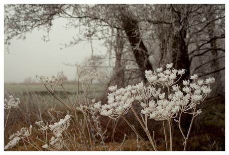 Ijsbloemen in het landschap