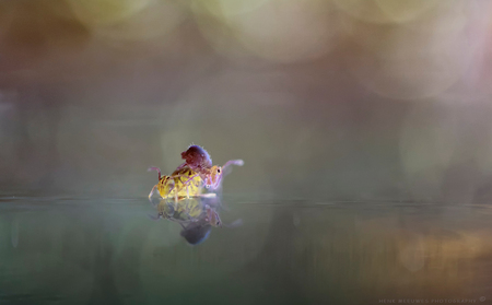 De IJdeltuiten - Ik heb vanmiddag eens even goed de springstaartjes bestudeerd maar wat een ijdeltuiten zeg! En maar kijken in de spiegel .......en als je hoger staa - foto door h.meeuwes op 17-11-2017 - deze foto bevat: macro, spiegel, herfst, hoog, reflectie, insect, kijken, klimmen, dof, stapelen, bokeh, ijdel, springstaartje, groot diafragma, henk meeuwes